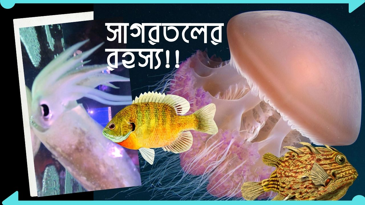 Radiant Fish World Cox's Bazar Mystery Under Ocean Aquarium Bangladesh